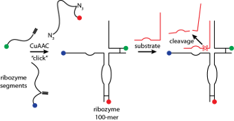 Scheme showing the use of click chemistry in the synthesis of the hammerhead ribozyme